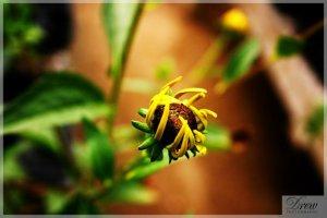Drew Photography. Photo courtesy of Drew Photography.